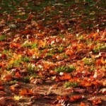 Leaf Removal Services - Fishers, Geist & Noblesville