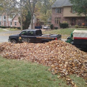 Leaf Removal by A Classic Cut