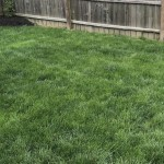 After Lawn Treatments - April 27, 2017