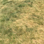 Before Lawn Treatments - R - Aug 11, 2016