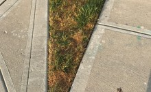 Lawn edges after no extra watering during drought conditions