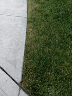 Recovering lawn edges after drought