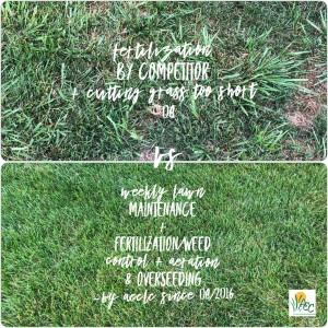 Compare Lawn Care Companies