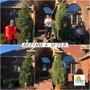 pruning shrubs - before & after