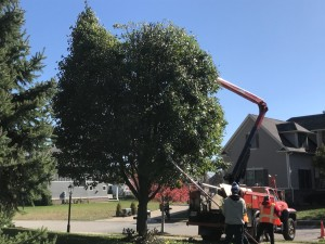 Tree Services by A Classic Cut in Fishers